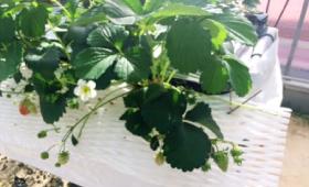 植物活力剤